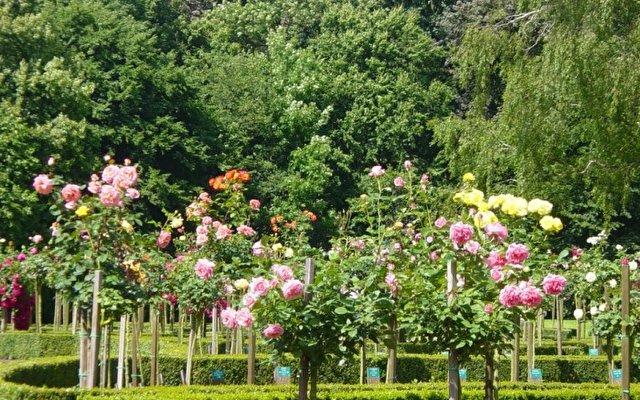 Queen's Park Le Jardin 6