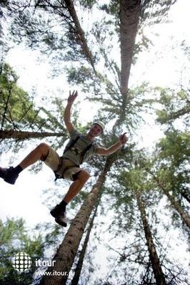 Gruener Baum 7