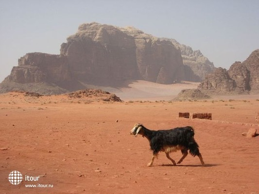 Seven Wonders Bedouin Camp 4