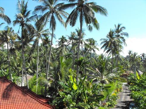 Bali Shangrila Beach Club 2
