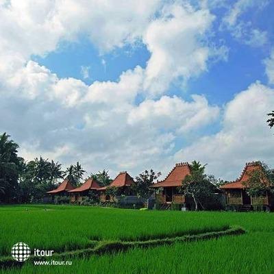Kajane Yangloni 7
