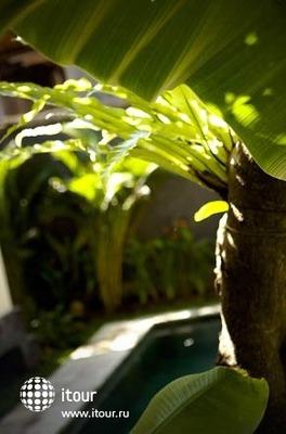 Mango Tree Villas 8