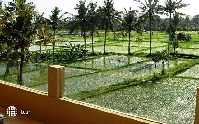 Green Field 4