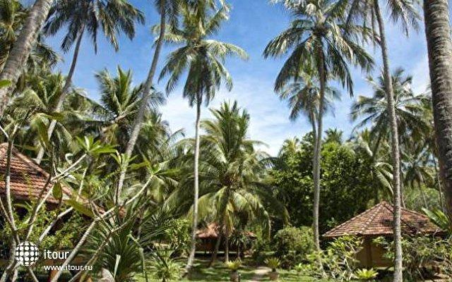 Palm Paradise Cabanas 5