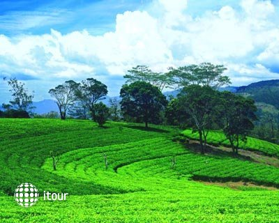 Ceylon Tea Trails 2