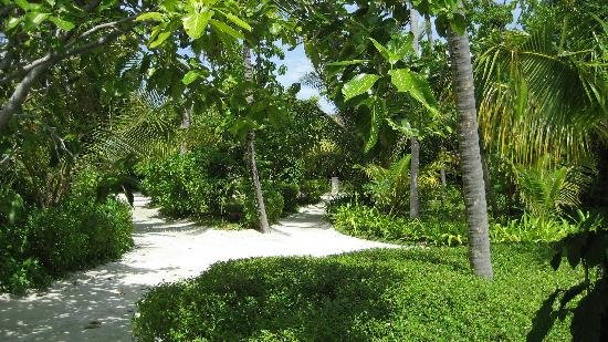 Bodu Huraa Resort 7