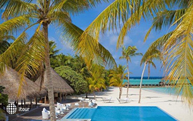 Maafushivaru Maldives 10
