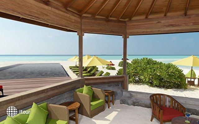Dhigufaru Island Resort 6