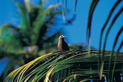 Taj Denis Island 7