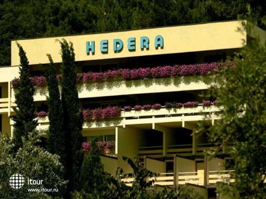 Hedera 1