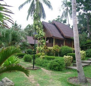 New Star Resort 2
