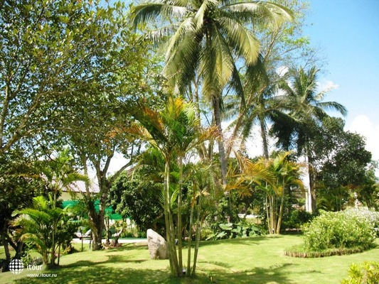 The Maekok River Village Resort 6