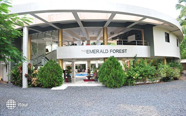 The Emerald Forest 1
