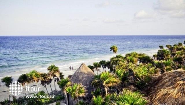 Papaya Playa 4