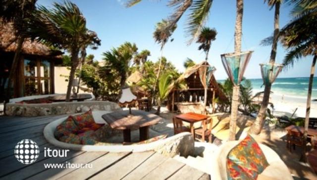 Papaya Playa 7