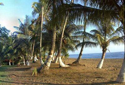 Hotel Suerre Caribbean Beach  8