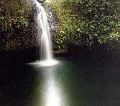 Arasha Ecuador's Tropical Forest Resort & Spa 3