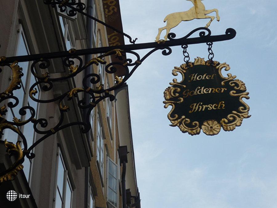 Goldener Hirsch 10