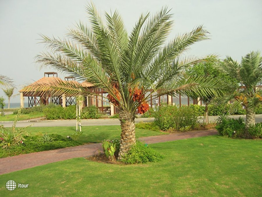 Umm Al Quwain Beach 4